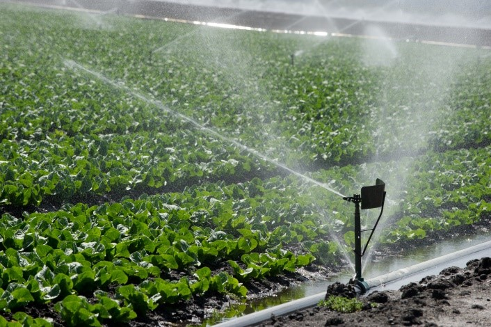 Irrigation on lettuce crops in Monterey, California. Contact climatechange@water.ca.gov for more information.