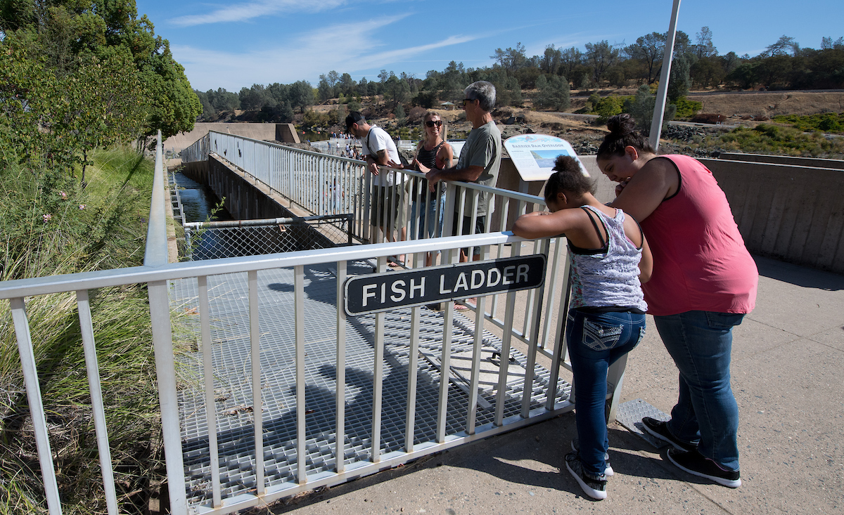 People gather at the fish ladder at the Feather River Fish Hatchery