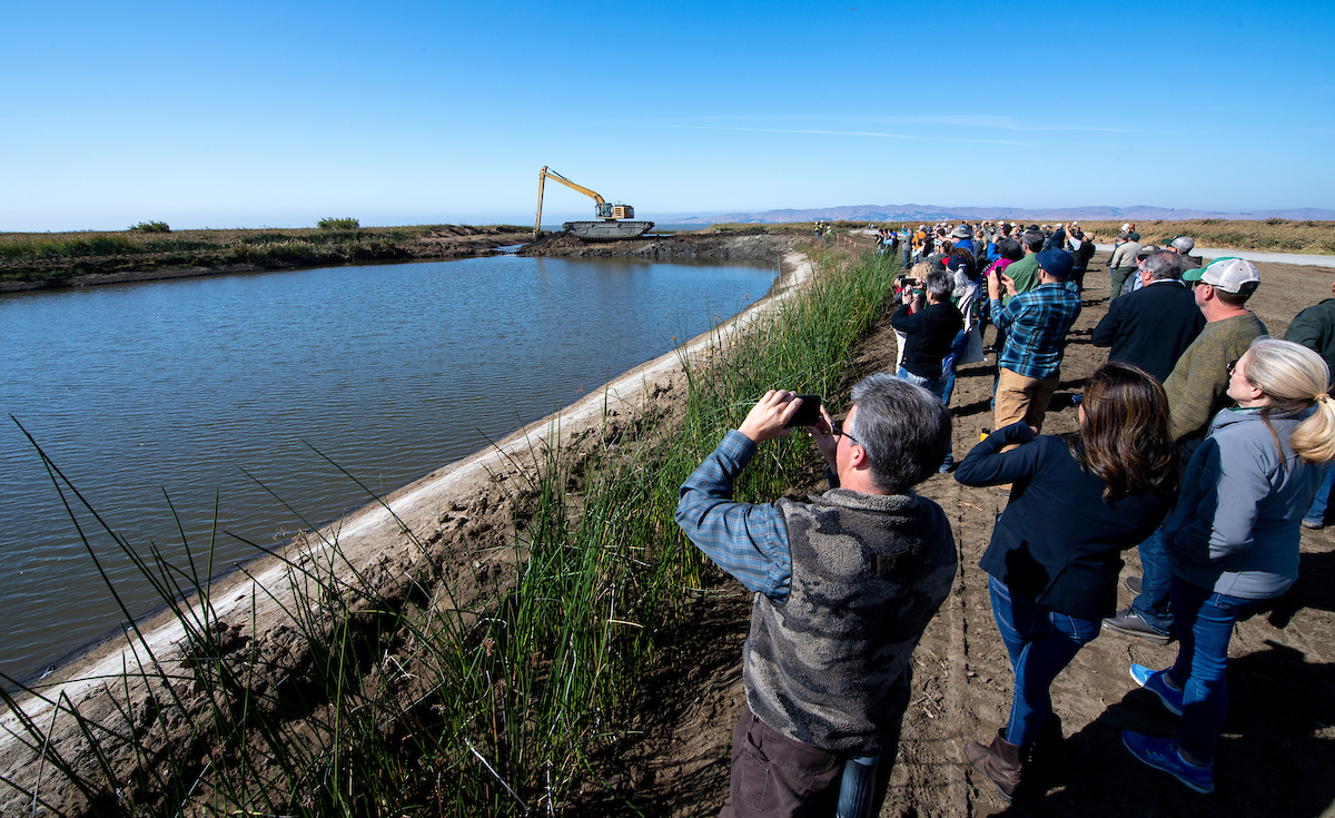 Attendees witness the breaching of a levee during the Tule Red Tidal Restoration Project breach ceremony.