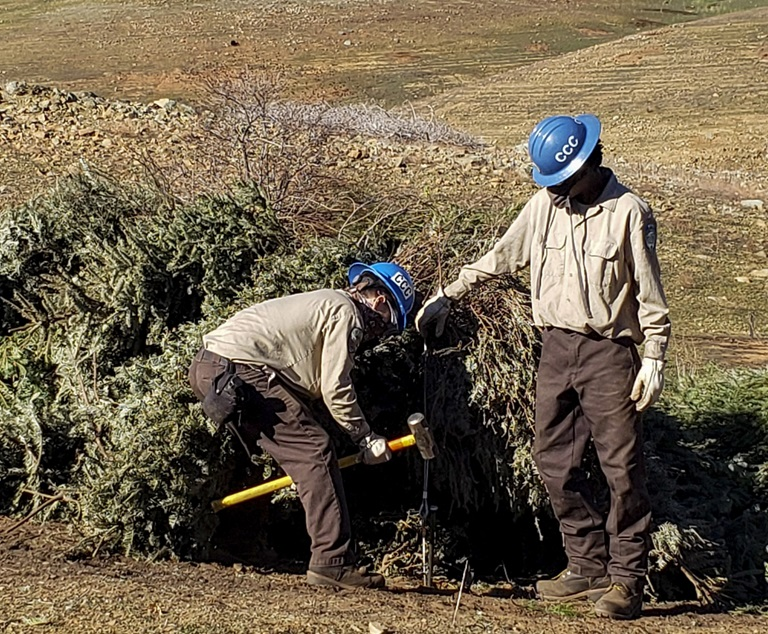 California Conservation Corpsmembers construct fish habitat structures using recycled Christmas trees in Oroville
