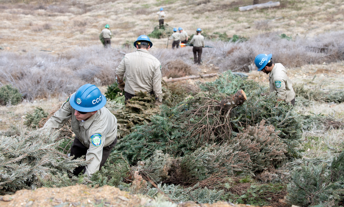 CCC crews anchor Christmas trees onto the shores of Lake Oroville.