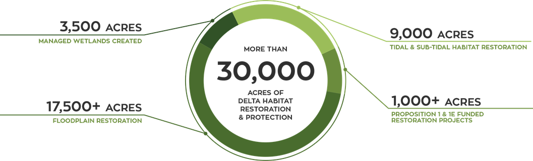 EcoRestore graphic depicting depicting numbers of acres restored. Overall, more than 30,000 acres of delta habitat have been restored, including 3,500 acres of managed wetlands created; over 17,500 acres of flood plain restoration; 9,000 acres of tidal and sub-tidal habitat restoration; over 1,000 acres of Proposition 1 and !E funded restoration projects. Contract DWR if you need more information about this graphic.