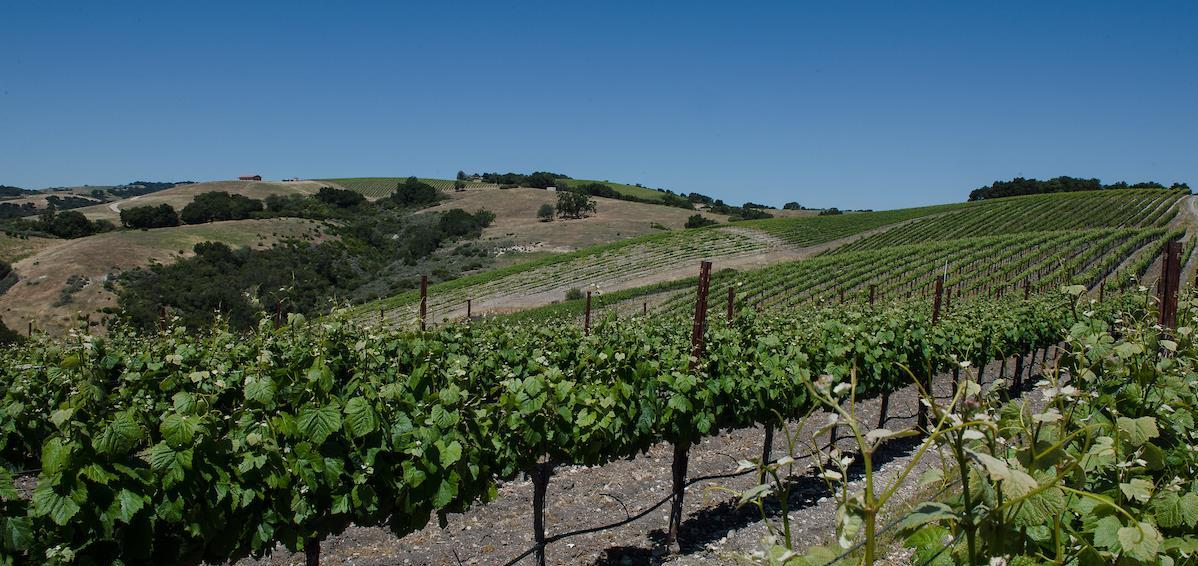View from Calcareous Vineyard in Paso Robles, California.