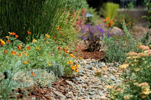Water-Efficient Landscape