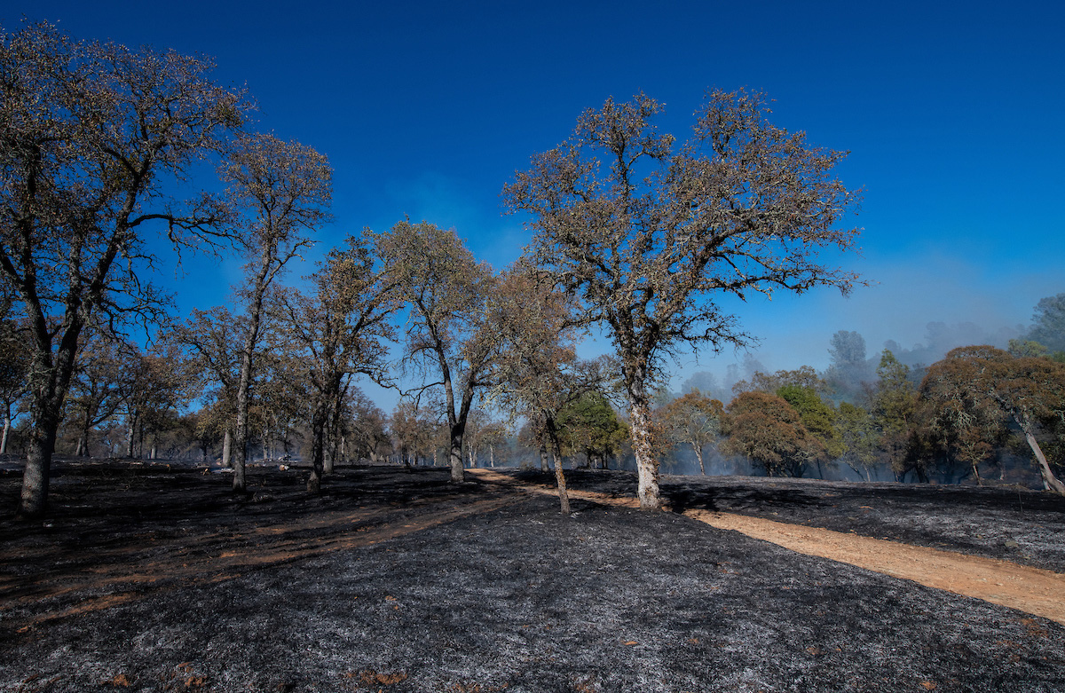 Controlled Burn at Loafer Creek State Recreation Area in Oroville, California